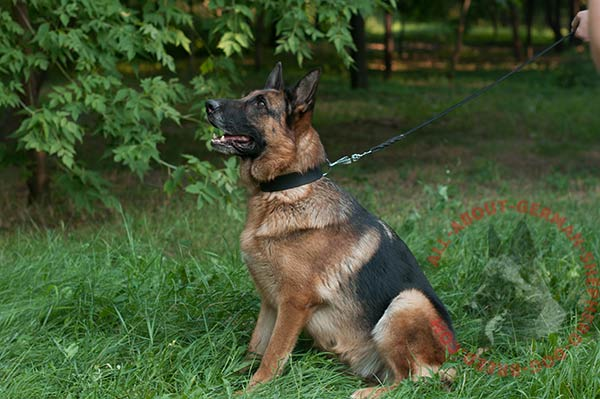 Classical leather dog collar for German Shepherd with plain surface