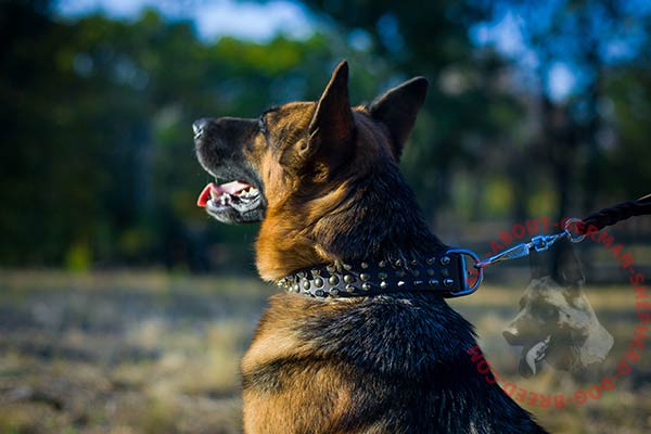 Leather dog collar for German Shepherd with hand-set adornment