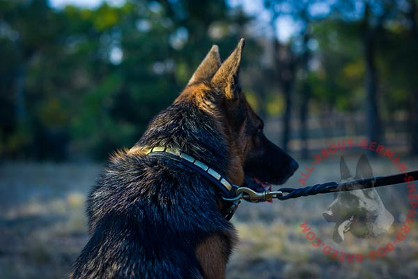 Amazing leather dog collar for German Shepherd with brass plates