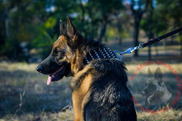 Good-looking leather dog collar for German Shepherd with rustless adornment