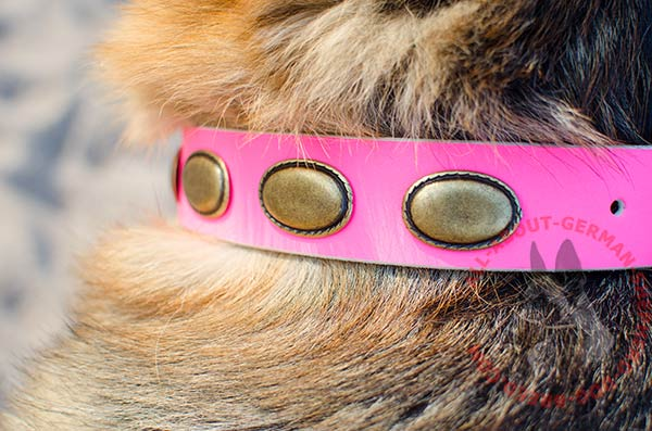 Close-up of leather dog collar for German Shepherd with plates