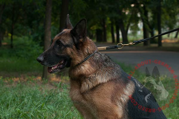 Choking leather dog collar for German Shepherd