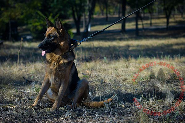 Easy-to-use leather dog collar for German Shepherd with strong hardware