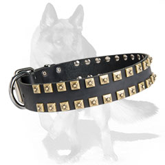 Excusively adorned leather dog collar with square studs