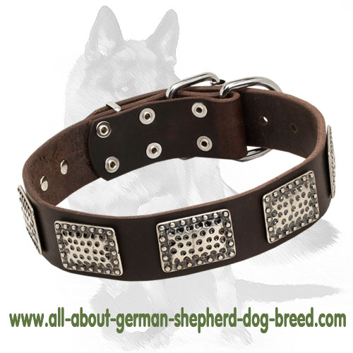 Warlike leather dog collar decorated with nickel plates