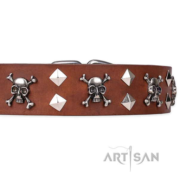 Casual style leather dog collar with exceptional adornments