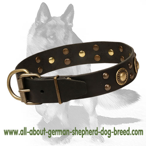 Leather dog collar with brass buckle and D-ring