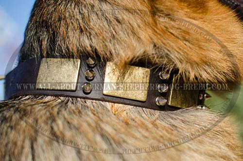 Exclusively decorated leather dog collar