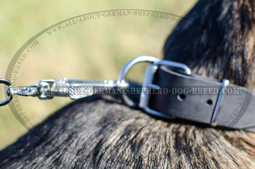 Multifunctional leather collar with buckle and D-ring