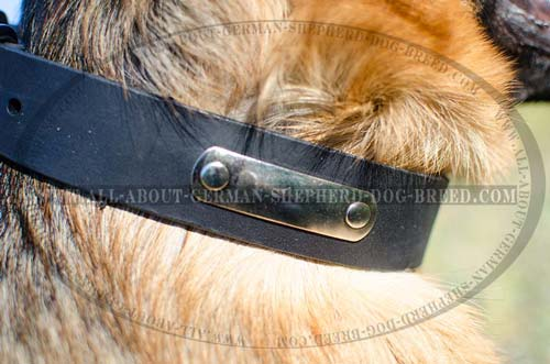Leather dog collar for easy identification