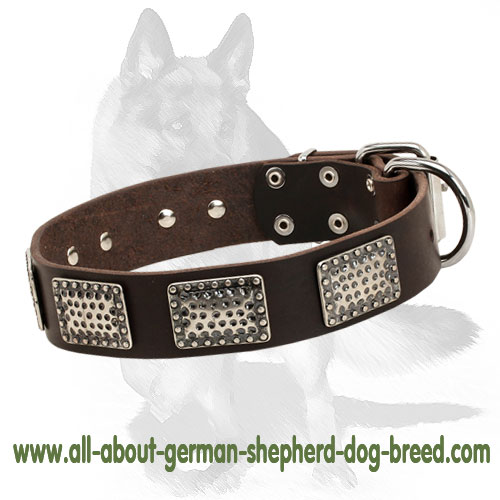 Strong leather dog collar with nickel plated buckle and D-ring