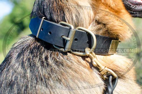 Comfy leather dog collar with nickel buckle and D-ring