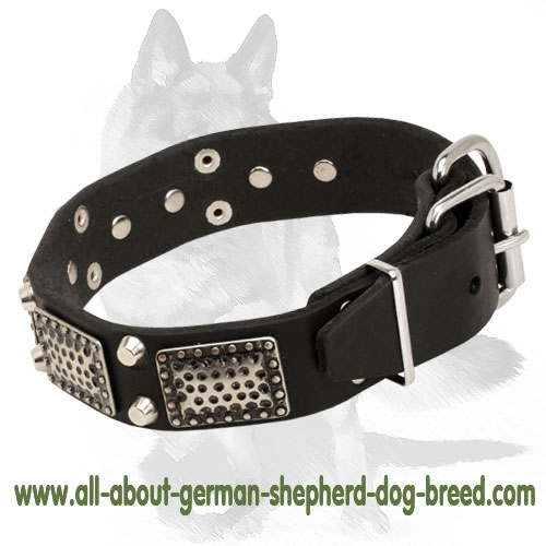 Leather dog collar with riveted nickel fittings
