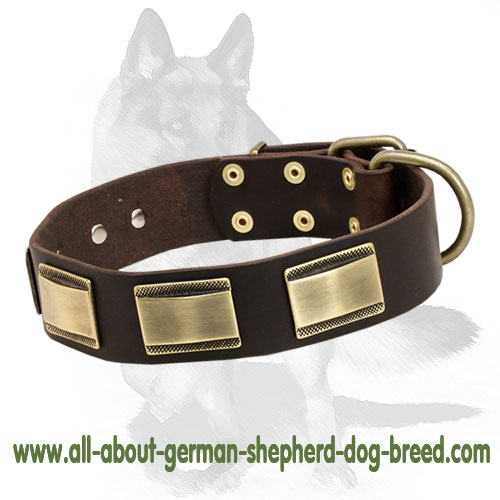 Leather dog collar with nickel plated buckle and D-ring