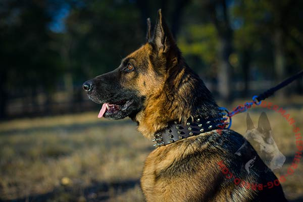 Noteworthy leather dog collar for German Shepherd with spikes