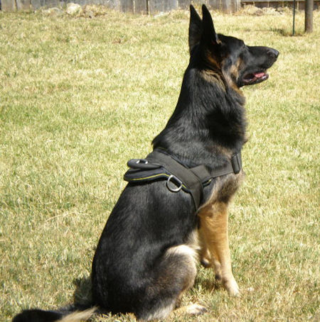 German Shepherd Dog Training Equipment Solution Dog Harness