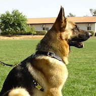 tracking pulling dog harness for german shepherd