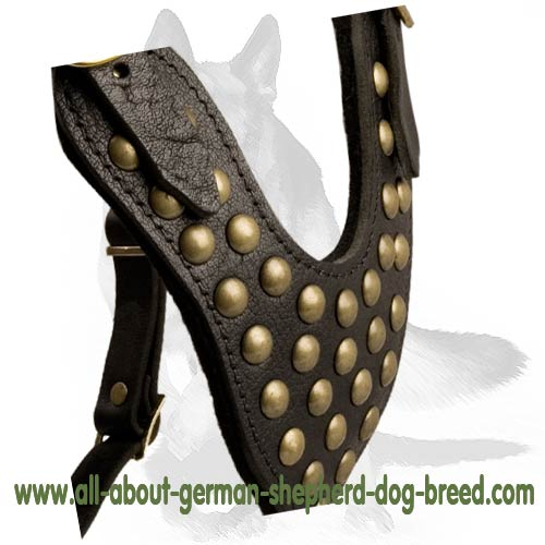 Studded leather dog harness