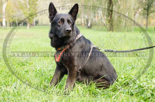 Handcrafted Leather Dog Harness for German Shepherds [H1FL ...