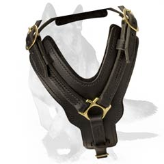 Harness appropriate for agitation/attack training