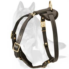 Perfect Dog Harness for safe walks