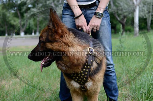 Exclusive Dog Harness for walk and training