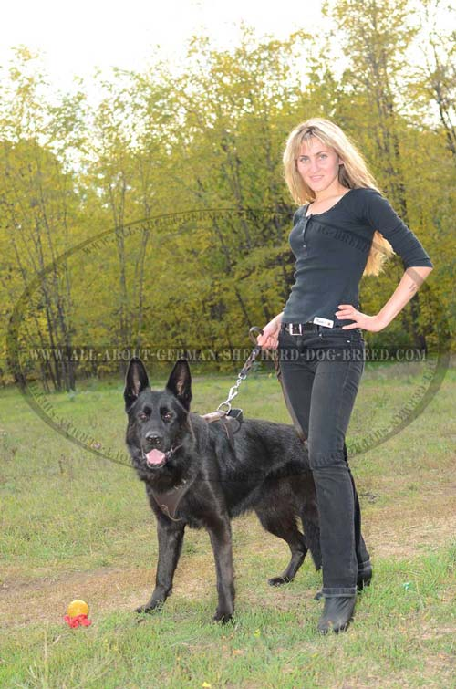 German Shepherd Leather Harness with Wide Chest Plate