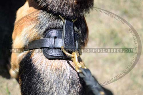 Exclusive Leather Dog Harness