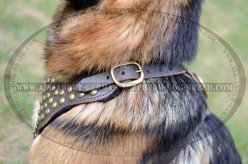 Comfortable Dog Harness with thick and wide straps