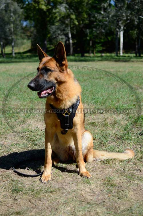 Perfect German Shepherd Dog Harness fully Padded