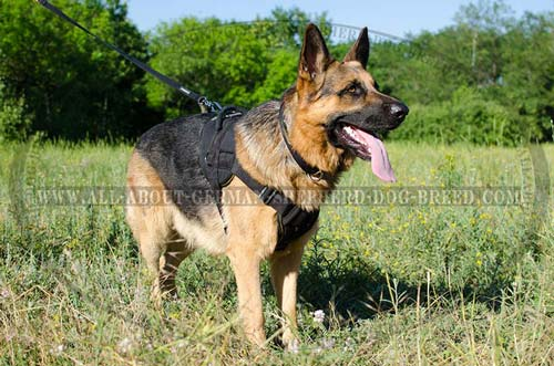 All weather nylon harness for German Shepherd