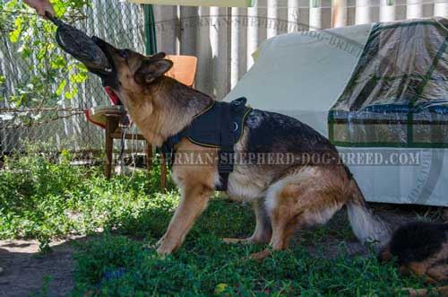Reliable nylon harness for German Shepherd