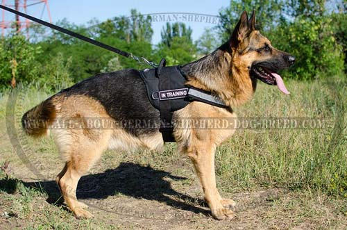 Reflective German Shepherd nylon harness