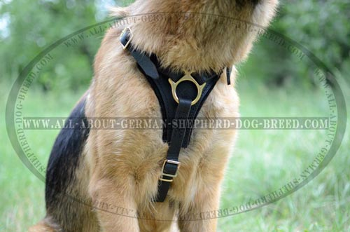 Dog Harness with soft felt padded chest plate