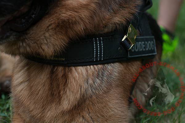 Reliable leather German Shepherd harness with buckles for handle fixing