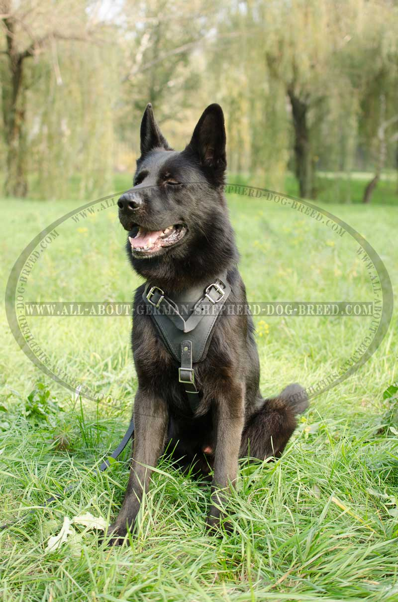 is th the known kinetic ghost patrol swat series as dog adjustable police comfort new harness comforter gray and nylon for padded