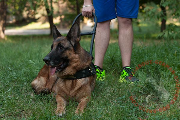 Leather canine harness for German Shepherd service dogs