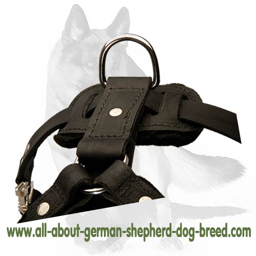 Y-Shaped leather dog harness with reliable D-ring