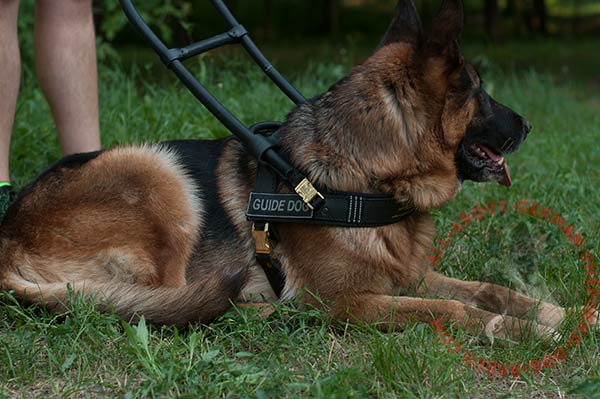 Guide leather dog harness for German Shepherd