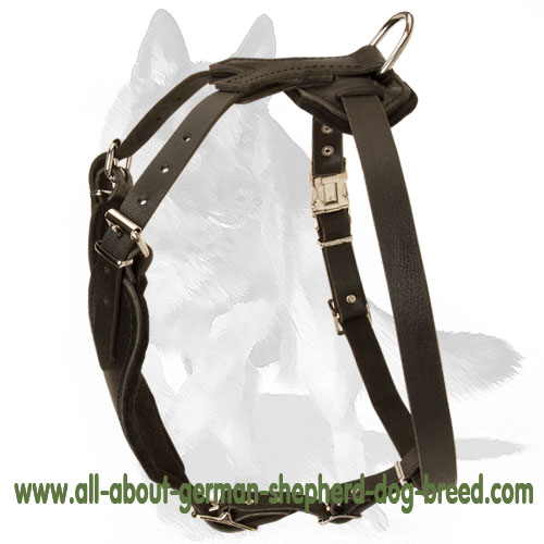 Training leather dog harness with strong D-ring