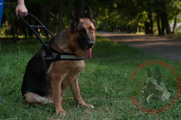 Well thought-out nylon German Shepherd harness with comfy handle