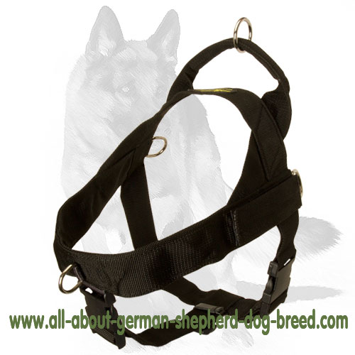 Super comfortable nylon harness for daily walking