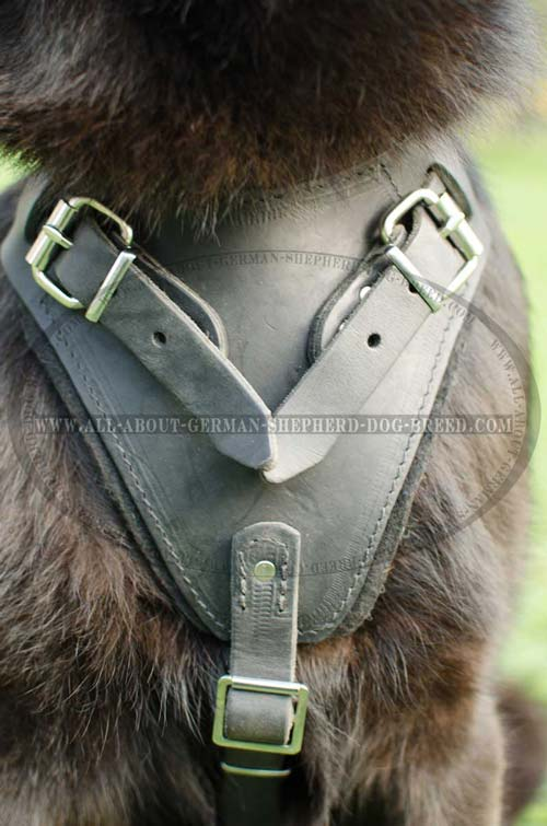 Padded on the chest agitation training leather dog harness