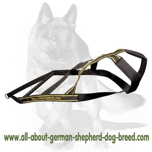 Adjustable nylon dog harness for daily use