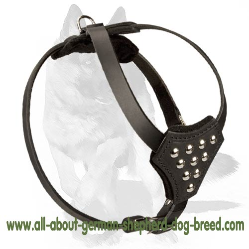 Y-shaped leather dog     harness with nickel plated studs