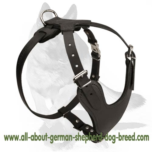 Leather dog harness with felt padded chest plate for better protection