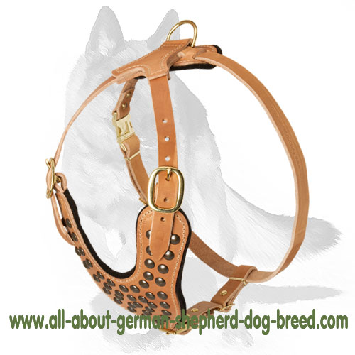 Softly padded leather dog harness