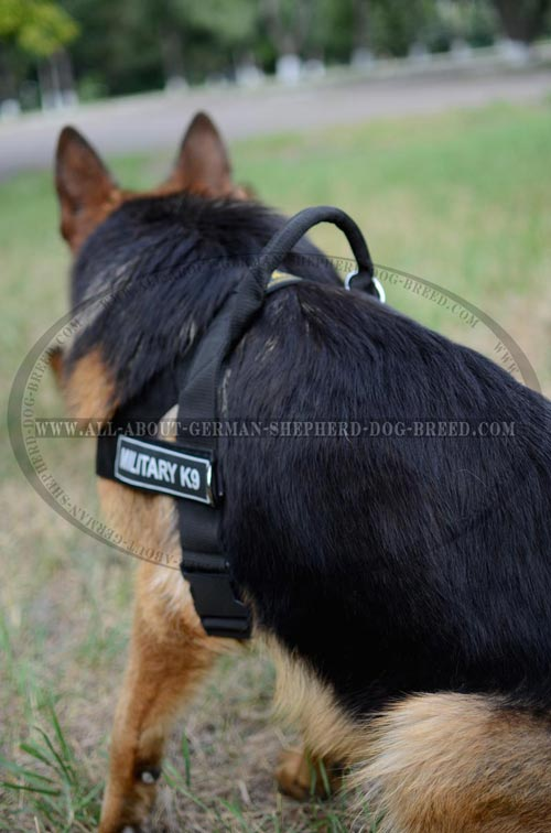 Super comfortable nylon dog harness