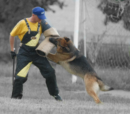bite sleeve for schutzhund training