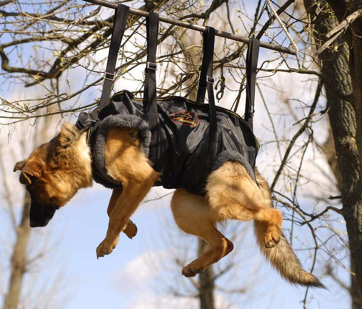 K9 Dog Vertical Harness Crucial Harness In Rapid
